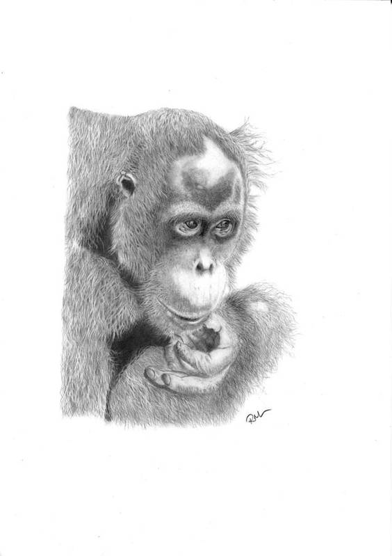 Animals Art Print featuring the drawing Annie by Rosanna Maria