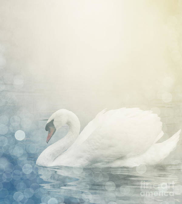 Nature Print featuring the pyrography Swan by Jelena Jovanovic