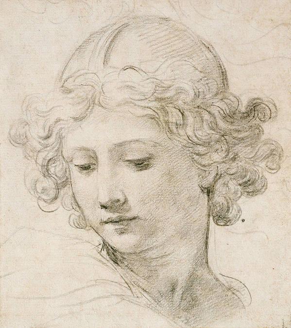 Young Boy Art Print featuring the drawing Head Of An Angel by Pietro da Cortona