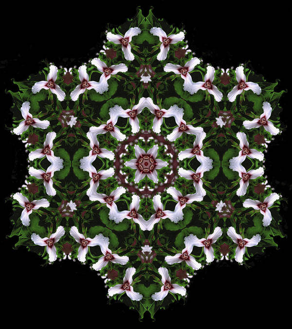 Mandala Art Print featuring the digital art Mandala Trillium Holiday by Nancy Griswold