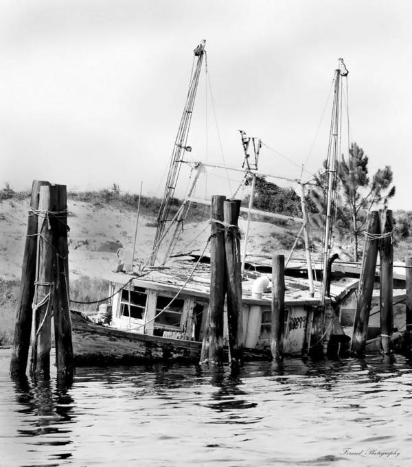 Boating Art Print featuring the photograph Old Salty by Debra Forand