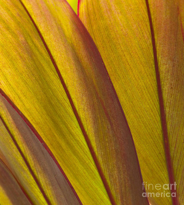 Bronstein Art Print featuring the photograph Leaf Patterns by Sandra Bronstein