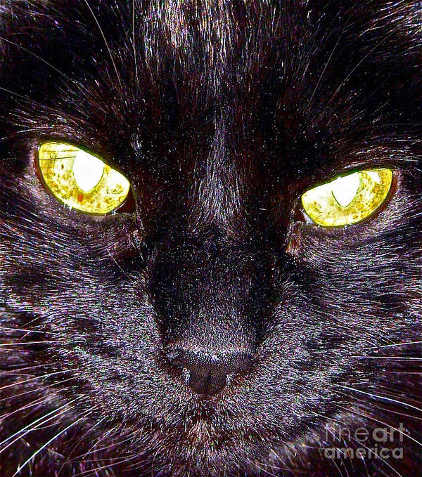 Cats Art Print featuring the photograph Mystic Eyes by Tonia Antilla