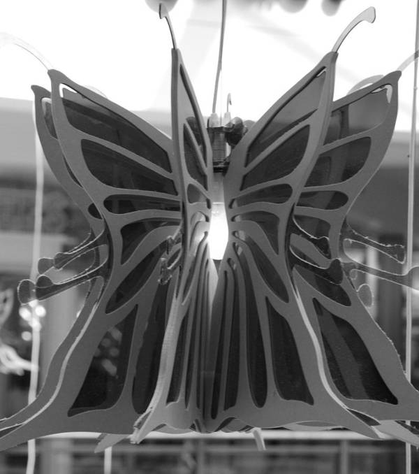 Black And White Art Print featuring the photograph Hanging Butterfly by Rob Hans