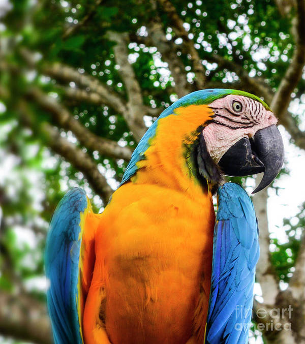 Parrot Art Print featuring the photograph Colorful Nature by Ksenia VanderHoff