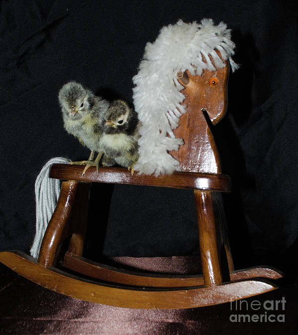 Bird Art Print featuring the photograph Double Seat Rocking Horse by Donna Brown