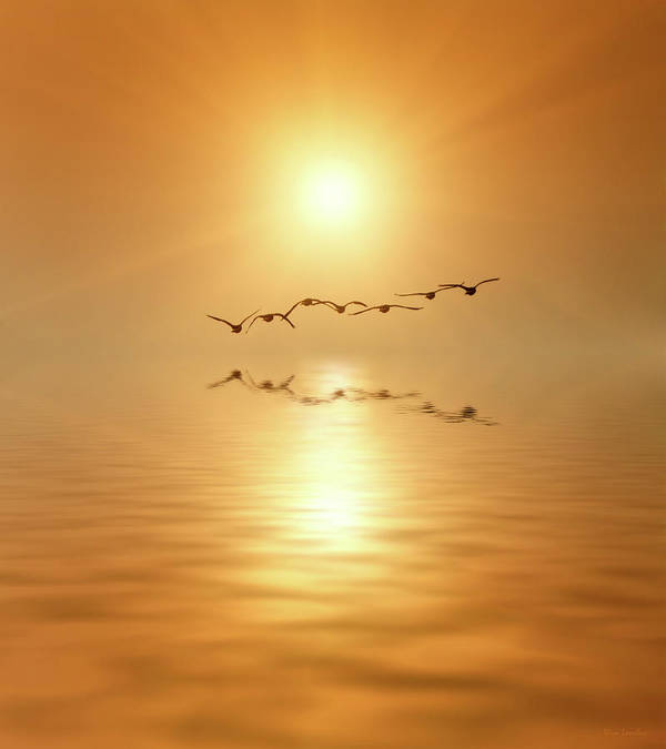 Birds Art Print featuring the photograph Flying South by Wim Lanclus