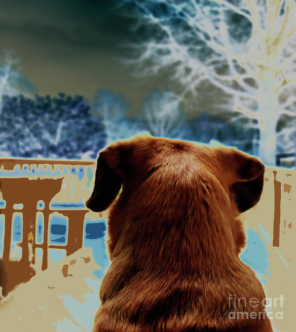 Dogs Art Print featuring the photograph From Her Perspective  by Steven Digman