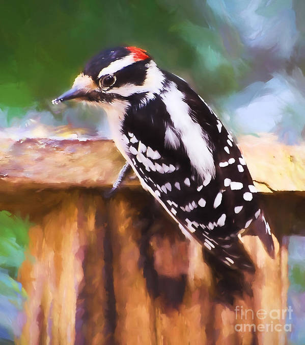Woodpecker Art Print featuring the photograph Wild Birds - Downy Woodpecker by Kerri Farley