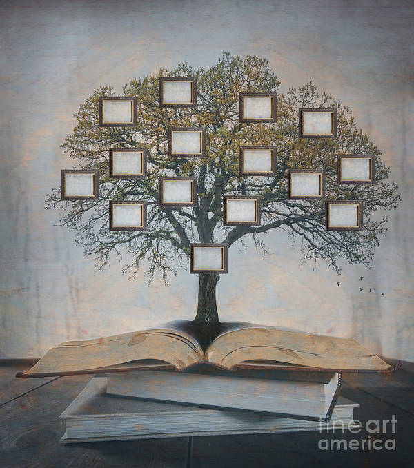 Lineage Art Print featuring the photograph Family Tree, Genealogy by Suzanne Tucker