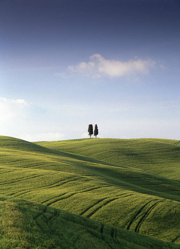 Photograph Art Print featuring the photograph Twin Cypresses by Michael Hudson