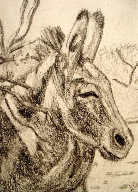 Donkey Art Print featuring the drawing Oatman Burro by Lessandra Grimley