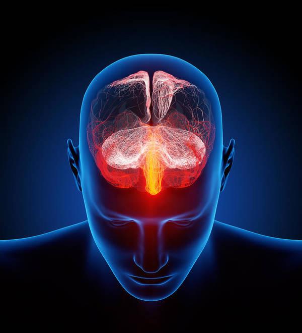 Brain Art Print featuring the photograph Human Brain by Johan Swanepoel