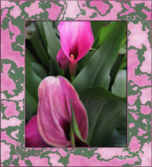 Lilies Art Print featuring the photograph Purple Calla Lilies by Scott Cameron