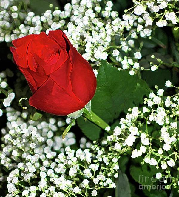 Rose Art Print featuring the photograph Rose And Baby's Breath by Kathleen Struckle