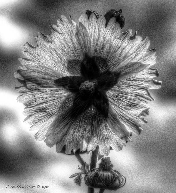 Flowers Art Print featuring the photograph The Black Star by Taylor Steffen SCOTT