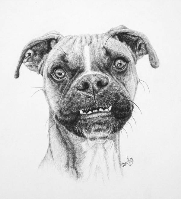 Dog Art Print featuring the drawing Scout by Mike Ivey