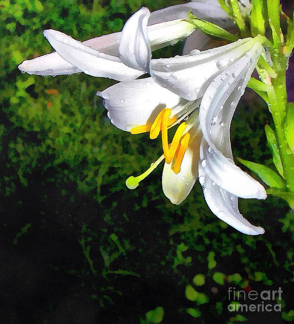 Pattern Art Print featuring the painting The Lily by Odon Czintos