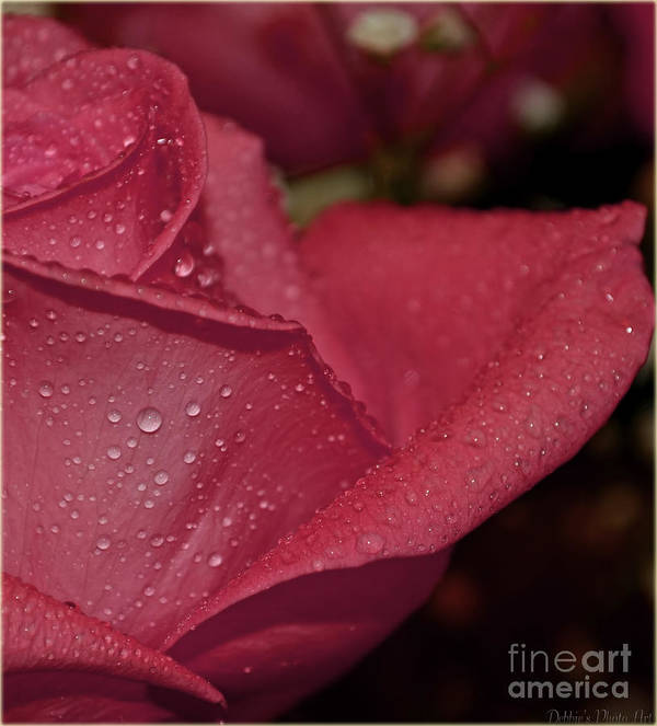 Botanical Art Print featuring the photograph Wet Pink Rose Macro by Debbie Portwood
