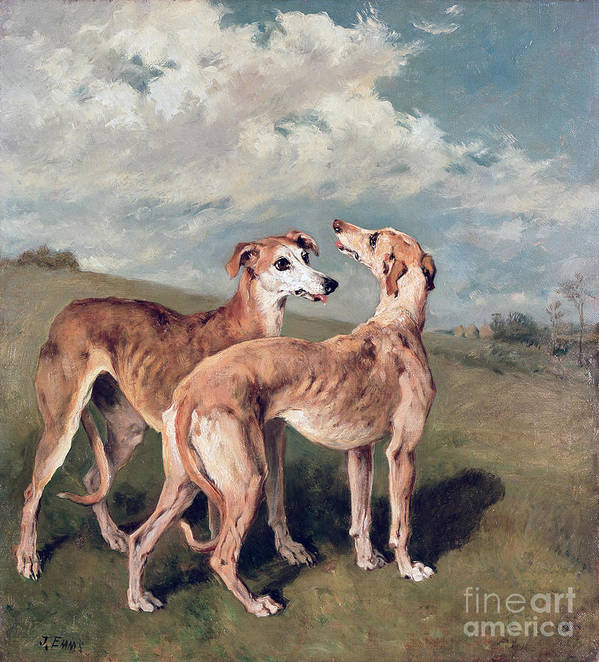 Greyhounds (oil On Canvas) By John Emms (1843-1912) Art Print featuring the painting Greyhounds by John Emms
