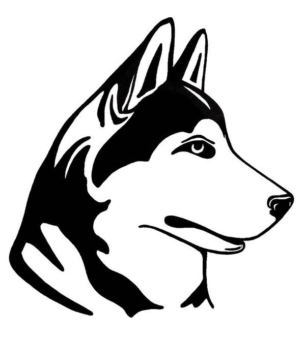 Dog Art Print featuring the drawing Husky by Lonnie Tapia