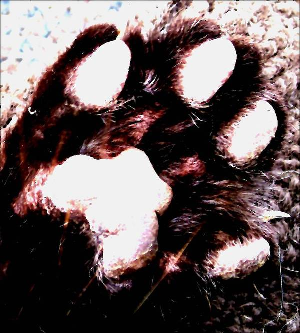 Art Print featuring the photograph Lets Paws For A Moment by Miss McLean
