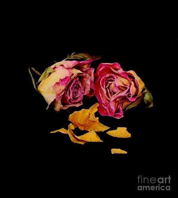 Floral Art Print featuring the photograph Memories by Fred Wilson