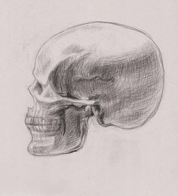 Skull Art Print featuring the drawing Skull Study Profile by Irina Sztukowski