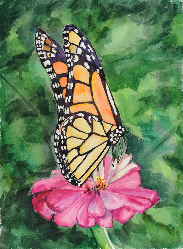 Watercolor. Butterfly Art Print featuring the painting Zinnia And Monarch by Judy Loper