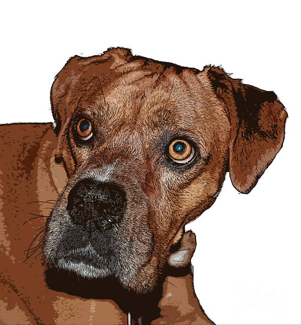 Bulldog Art Print featuring the photograph Buster Brown The Boxer by Sandra Clark