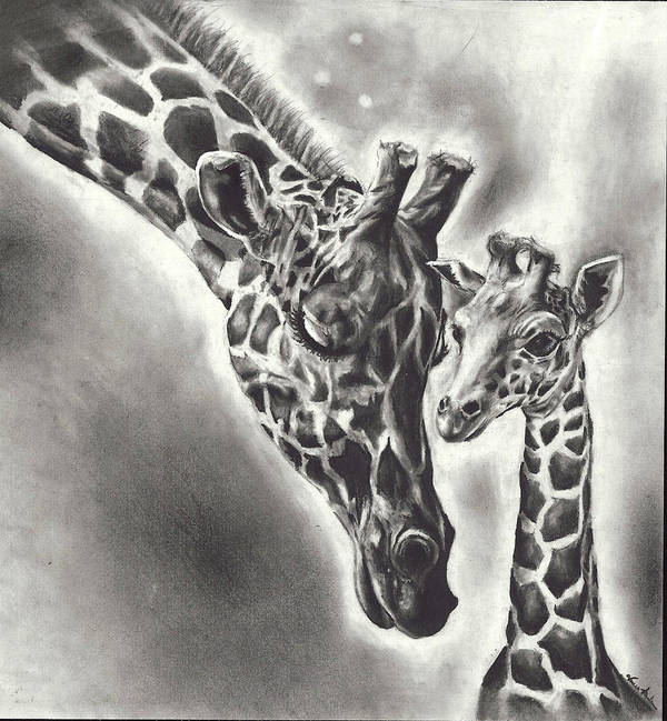 Giraffe Art Print featuring the drawing Giraffe by Vanessa Anderson