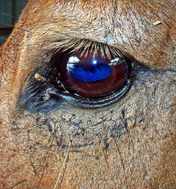 Equine Art Print featuring the photograph Honest Eye by Monica Wheelus