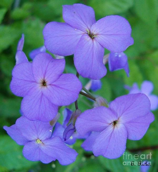 Flowers Art Print featuring the photograph Purple Passion by Sara Raber