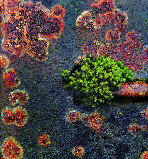 Rust Art Print featuring the photograph Rusting Still Life by Tim F Hale
