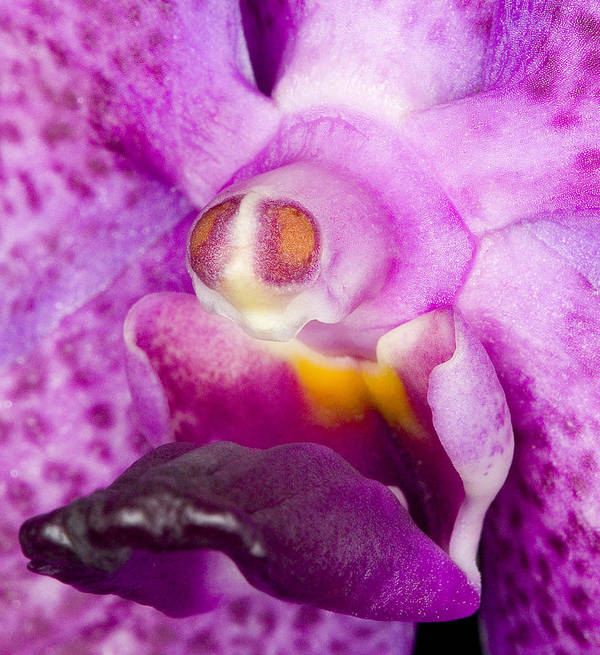Ribet Art Print featuring the photograph Orchid Flower Bloom by C Ribet