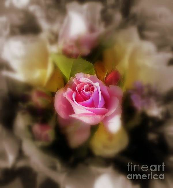 Sian Design Art Print featuring the photograph Soft Focus by Sian Lindemann