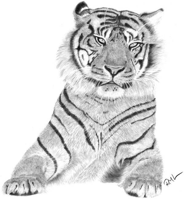 Tiger Artwork Art Print featuring the drawing Sumatran Tiger by Rosanna Maria
