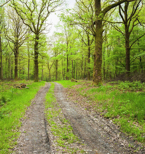 Scenics Art Print featuring the photograph Dirt Road Surrounded By Trees In by Mike Kemp Images