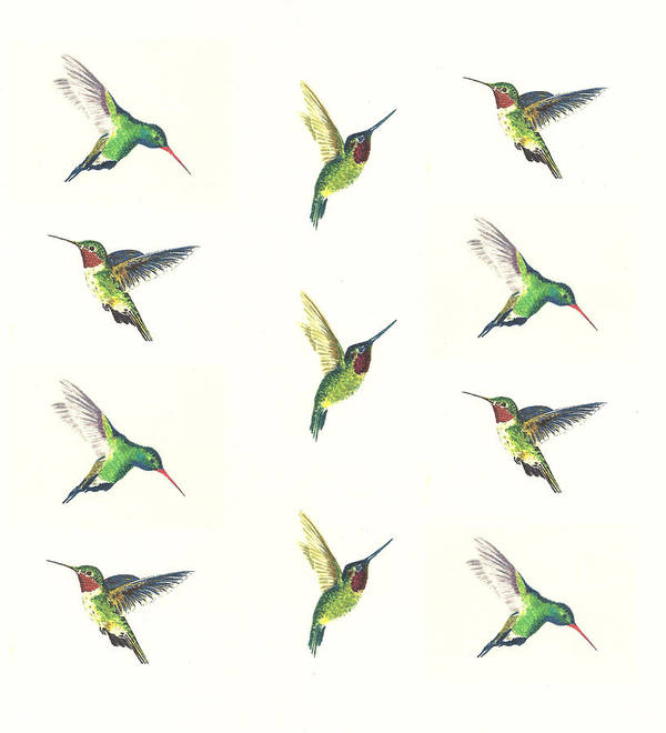 Animals Art Print featuring the painting Hummingbirds Number 2 by Michael Vigliotti