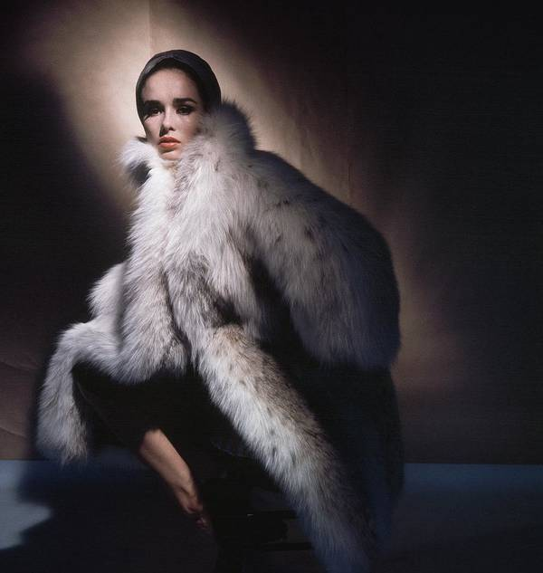 Studio Shot Art Print featuring the photograph Sondra Peterson Wearing Fur Coat by Horst P. Horst