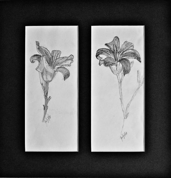 Pencil Sketches Art Print featuring the drawing Day lilies by Peggy King