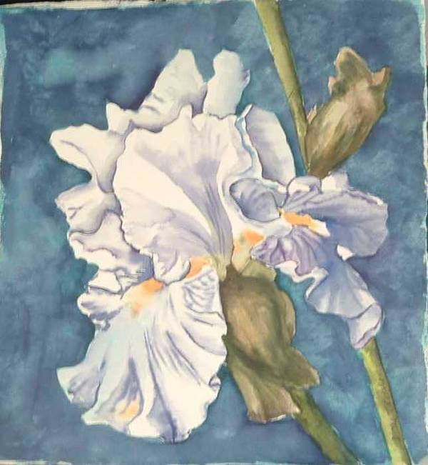 Watercolor Art Print featuring the painting Iris twenty one by Diane Ziemski
