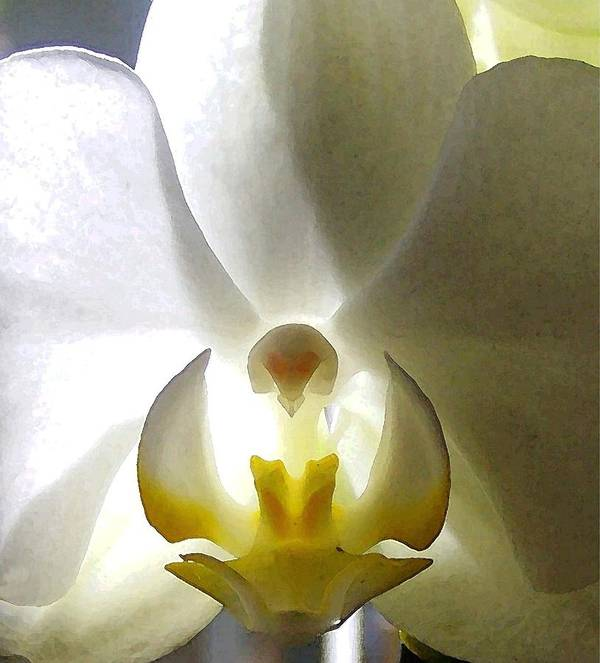 Orchid Art Print featuring the photograph Orchid - The Wallflower by Dina Sierra
