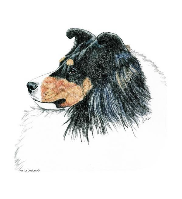 Sheltie Art Print featuring the drawing Shetland Sheepdog, Sheltie Tri Color by Kathleen Sepulveda