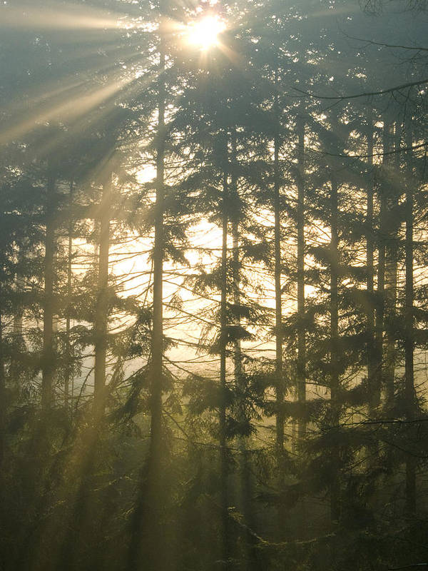 Nature Art Print featuring the photograph Light In The Forest by Daniel Csoka