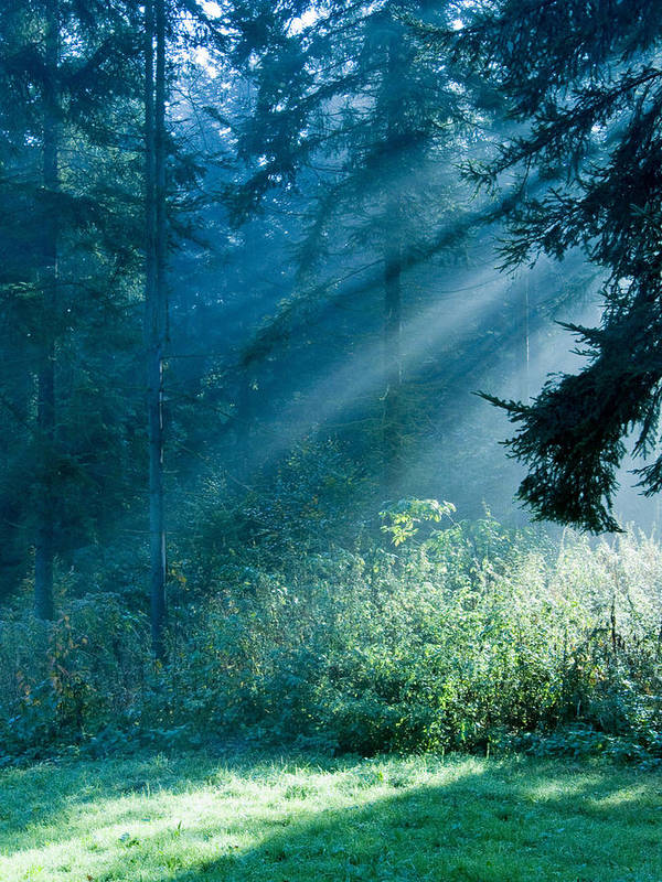 Nature Art Print featuring the photograph Elven Forest by Daniel Csoka