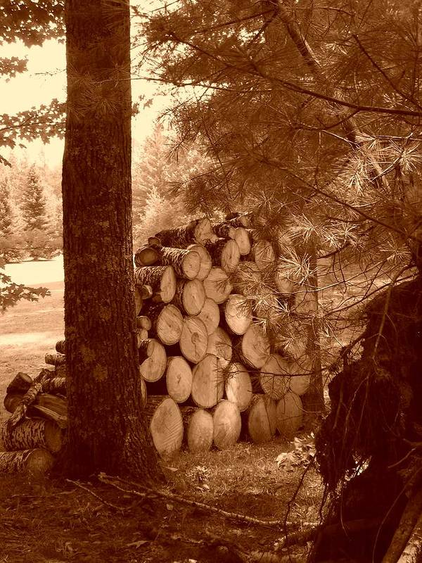 Firewood Art Print featuring the photograph Firewood by Peter Mowry