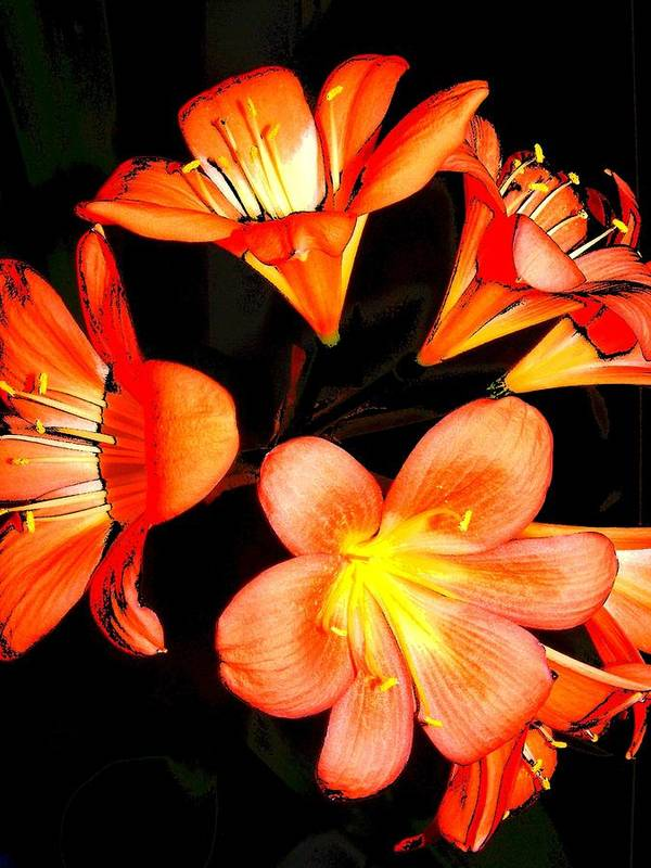 New Art Print featuring the digital art Floral 6019 by Chuck Landskroner