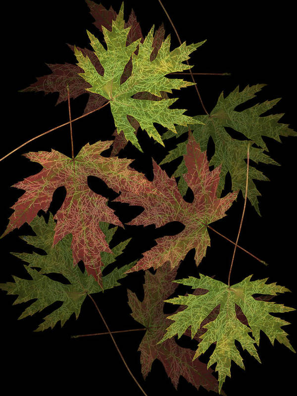 Leaves Art Print featuring the photograph Leaves On Leaves by Marsha Tudor