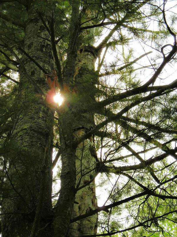 Trees Art Print featuring the photograph Peek A Boo by Peter Mowry